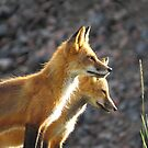 mother and daughter fox survey the scene by Alex Call