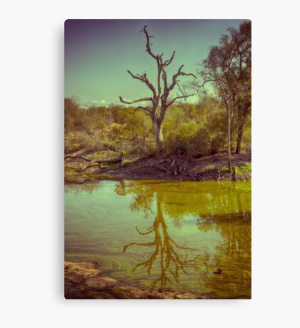 Leadwood Reflection Canvas Print