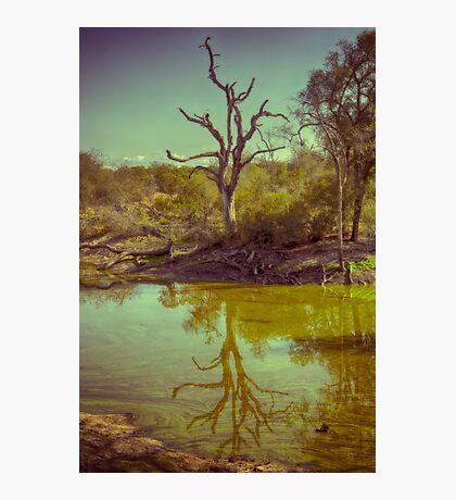 Leadwood Reflection Photographic Print