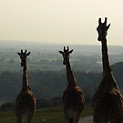 Head and Shoulders Above the Dusky Plains by NowhereMan