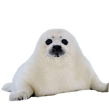 Cría de foca de charlo19