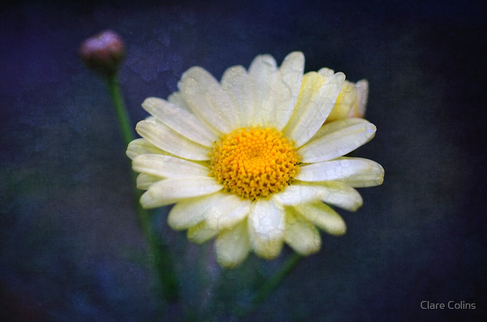 A single yellow daisy just for you! by Clare Colins