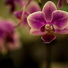 Orchid by Christopher Wardle-Cousins