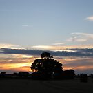 Oak at sunset by KatDoodling