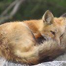 Kaiwak naptime by Alex Call