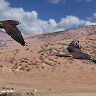 Hawks of Palomino Valley by SB  Sullivan