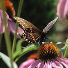 Butterfly Summer by Karen Casey-Smith