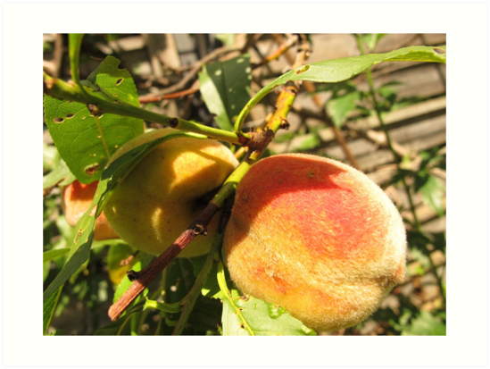 Juicy Peach by MarianBendeth
