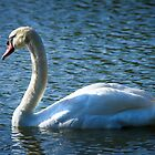 Swan on Lake by George Lenz
