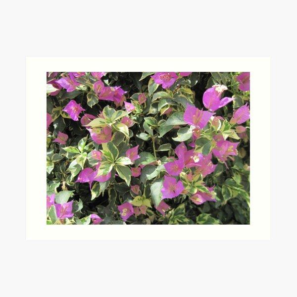 Dublin Flowers Art Print