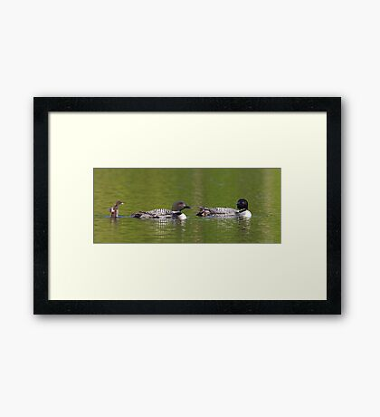 Welcome to the looniverse! Common Loons Framed Print
