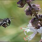 Native Bee by Helenvandy