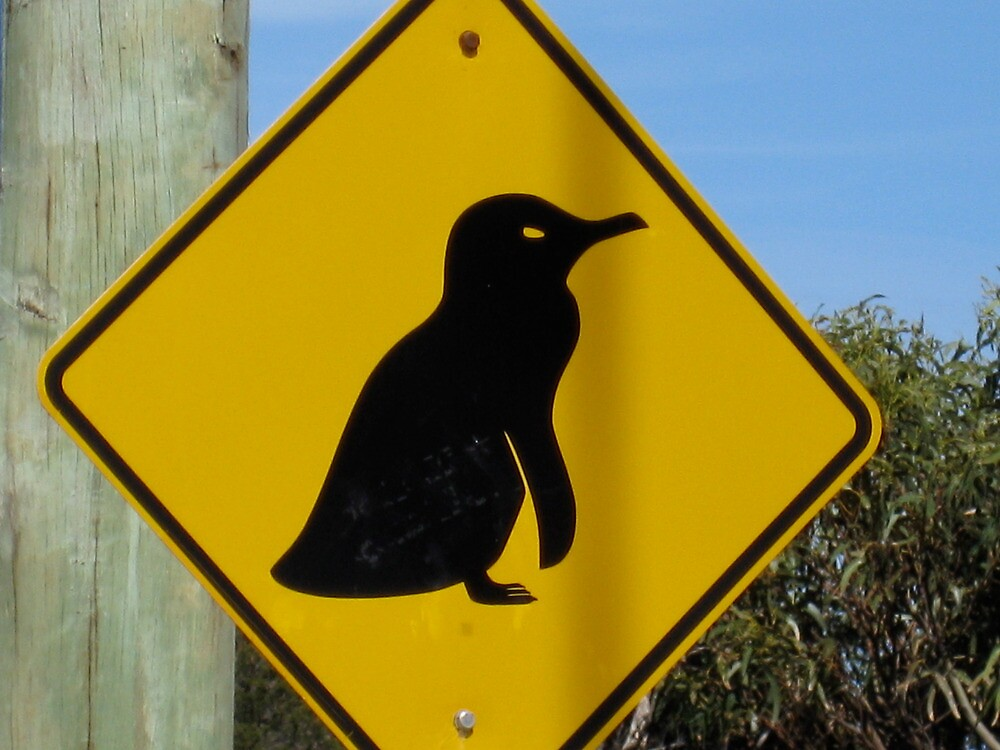 Beware of Penguins by Penny Smith
