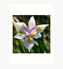 Irresistible Iris Art Print