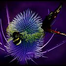 the bee thistle and butterfly by clayton  jordan