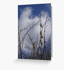 Pussy Willow against a Spring Sky Greeting Card