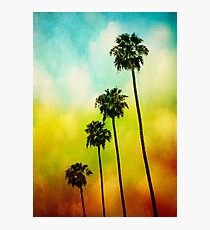 4 Palms Photographic Print