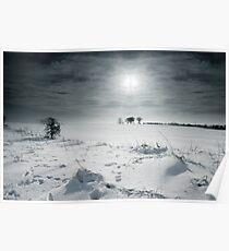Winter bare. Poster
