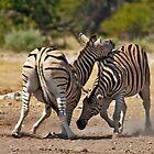 Zebras fighting by Konstantinos Arvanitopoulos