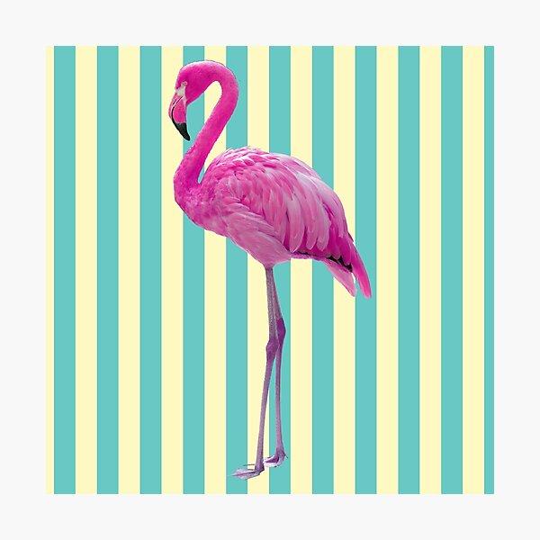 Hot Pink Flamingo Photographic Print