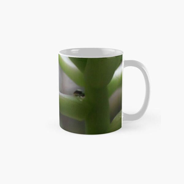 succulent raindrop Classic Mug