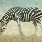 Zebra Grazing by Vin  Zzep