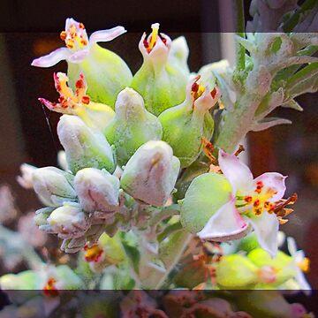 Flapjack Flowers by CricketNoel