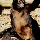 A Monkey's Arm by WilMorris
