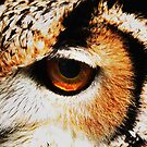 Owl's Eye by WilMorris