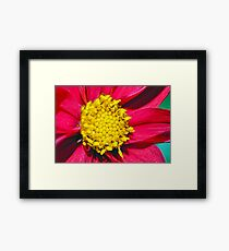 Flower Macro Framed Print