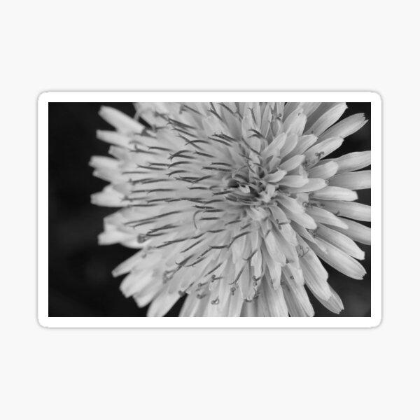 Delicate Dandelion Curls in Black & White Sticker