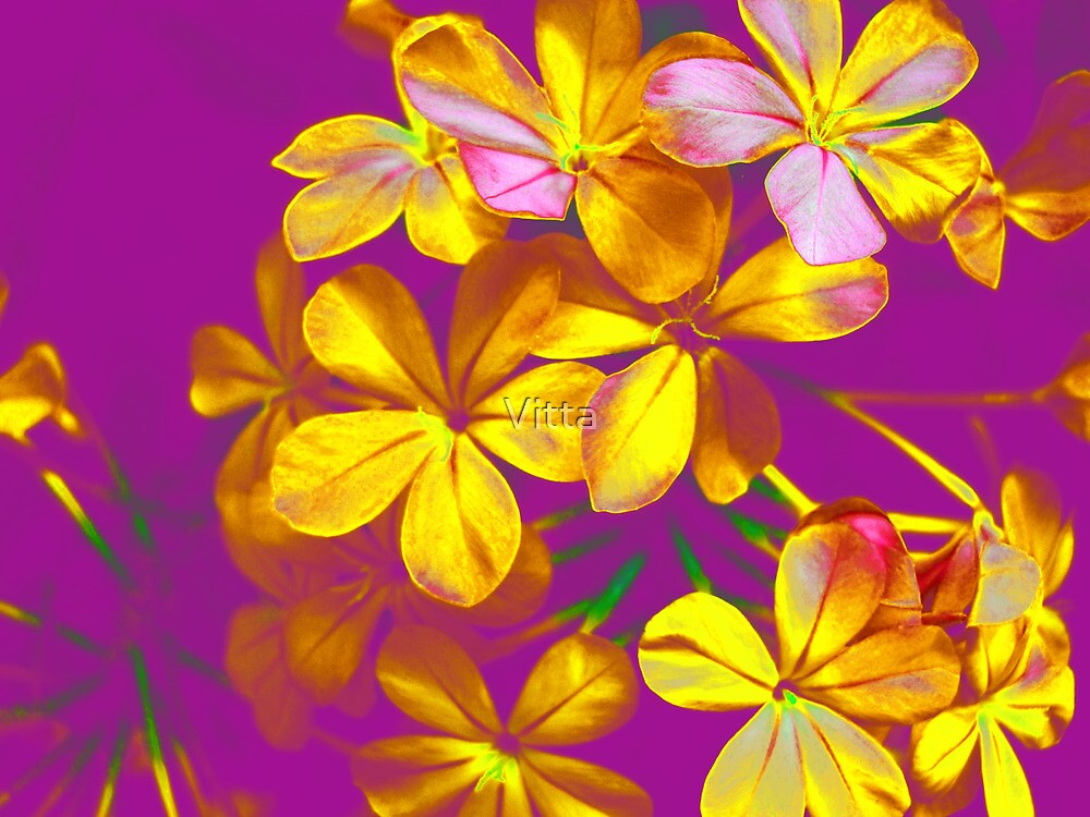 Colours Flowers by Vitta