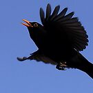 Flight Of The Blackbird by snapdecisions
