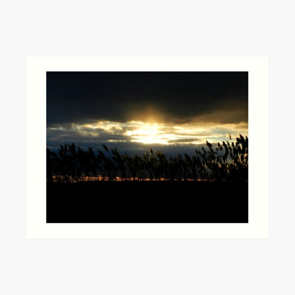 Long Island Reed Sunset Art Print