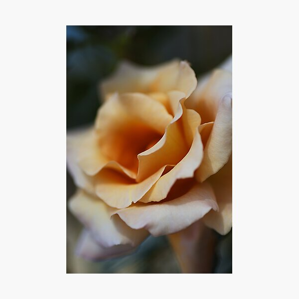 Dreaming Of Coffee Rose Photographic Print
