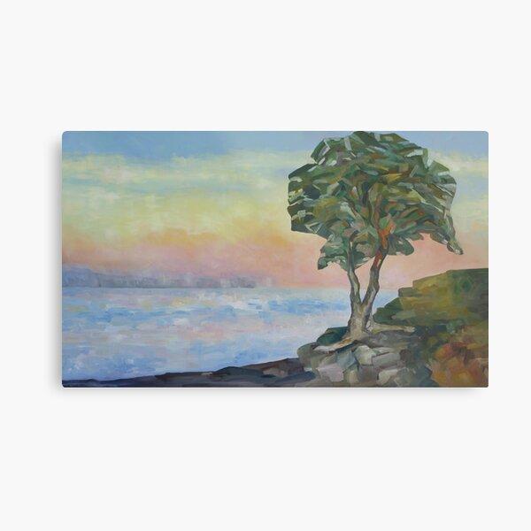 Evening and the Arbutus Tree  Metal Print