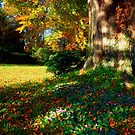 Cyclamen Under A Beech Tree by printscapes