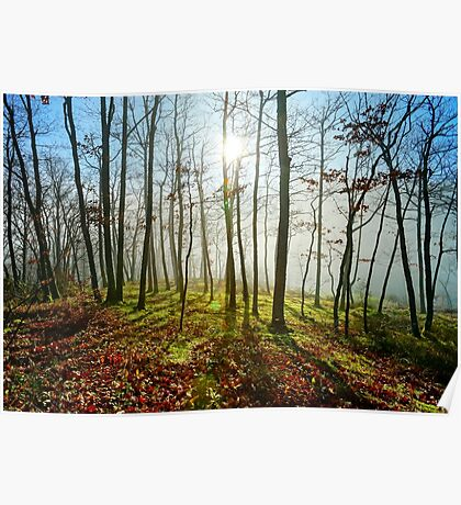 Beauty of winter forest with moss, sunny day, nature concept Poster