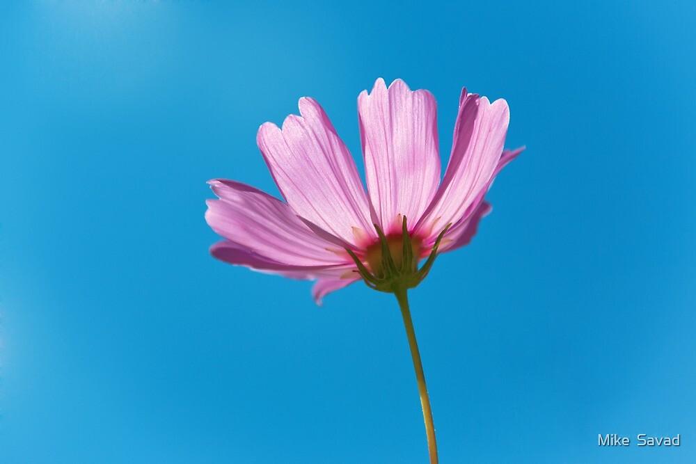 Flower - Growing up in Philadelphia by Michael Savad