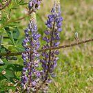 Beautiful in Purple by MaluC