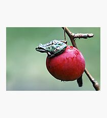 Pacific Tree Frog On A Crab Apple Photographic Print