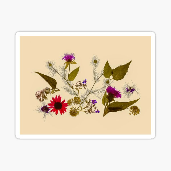 Olivia - vintage inspired botanical flower photograph Sticker