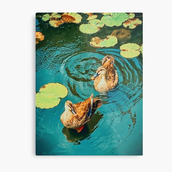 Northern Pintail Ducks, Shinobazu Pond, Tokyo, Japan Metal Print