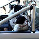 Backseat Drivers by Mark Batten-O'Donohoe