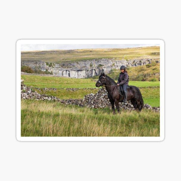 dales pony Sticker