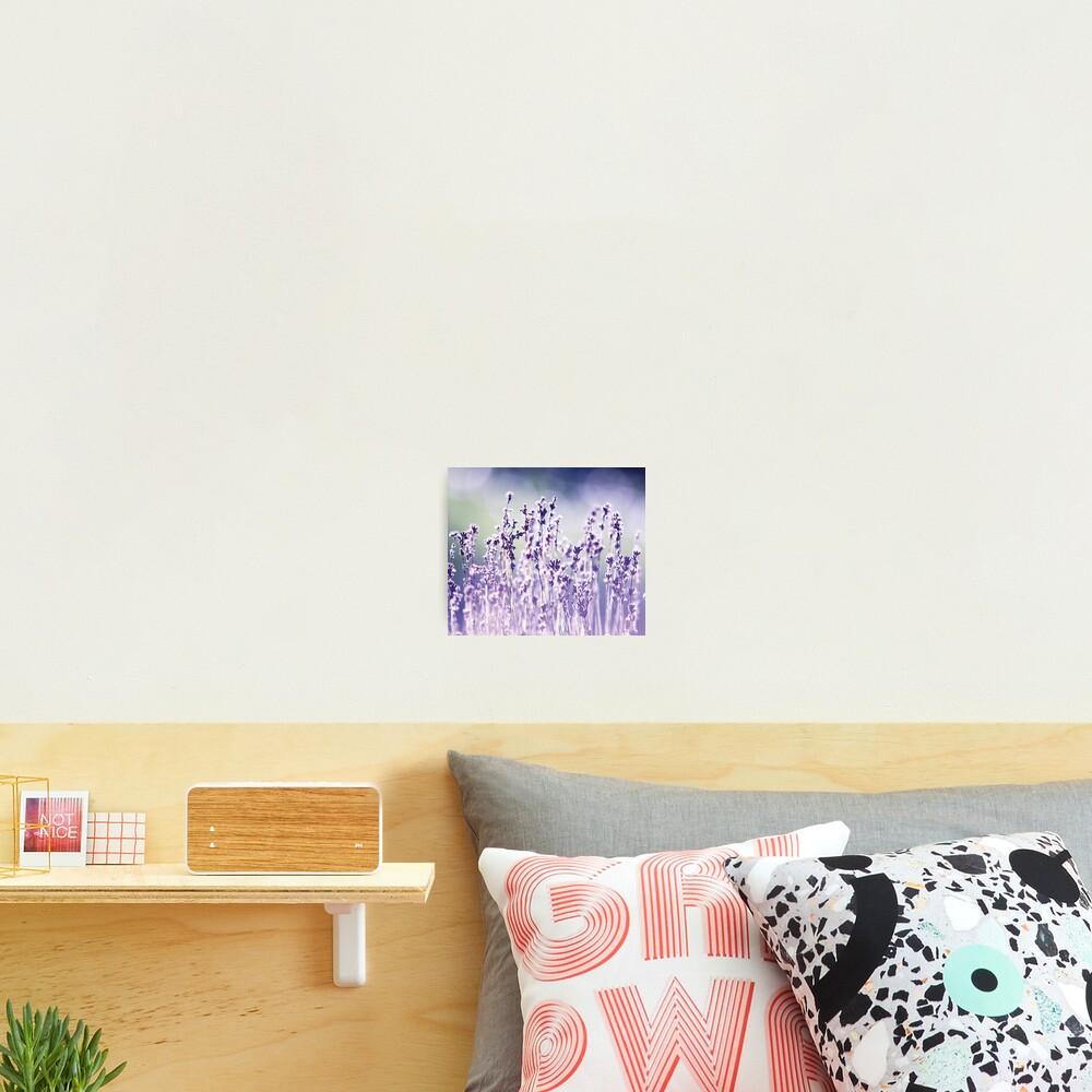 Purple summer field, lavender Photographic Print