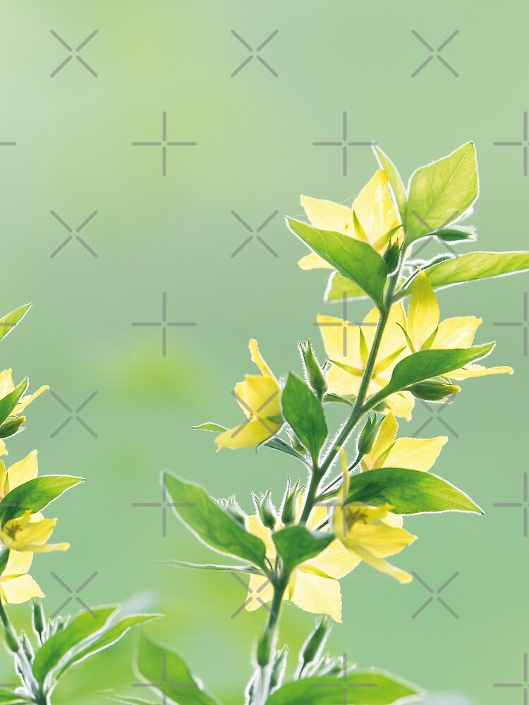 Fresh green botanicals by ColorsHappiness