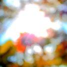 Fall Blur by jroch