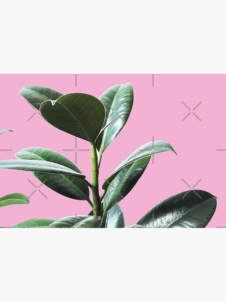 Graphic green botanicals, pink background by ColorsHappiness