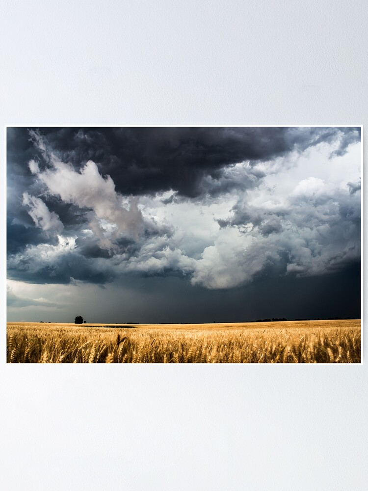 Alternate view of Cotton Candy - Storm Clouds Gather Over Golden Wheat Field in Kansas Poster